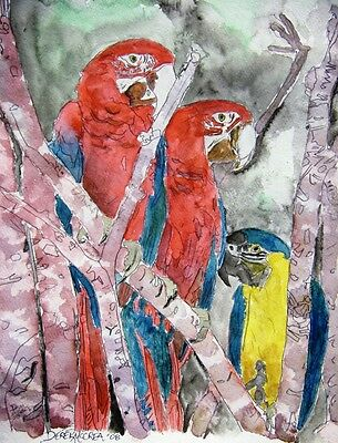 macaw parrots parrot animal bird abstract watercolor painting art print parrots