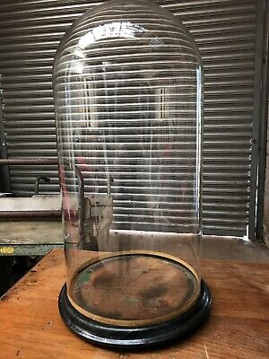 Original Antique Glass Taxidermy / Clock Display Dome On Ebonised Wooden Base