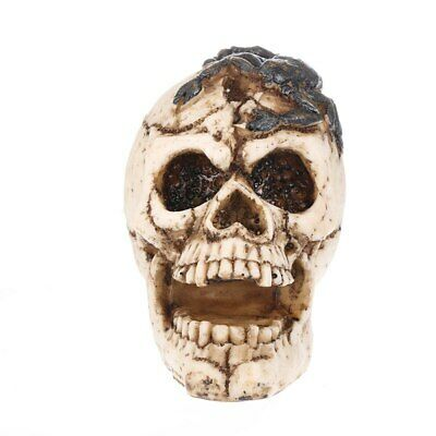 Resin Craft White Skull Head Carving Statue Halloween Party Decoration Skull Scu