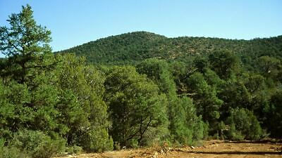 No Reserve, 30 AC Northern Arizona,Trees, 6200' Elevation, Roads,with water
