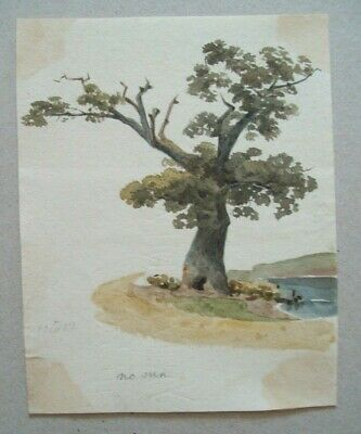 EARLY 19th CENTURY WATERCOLOUR - STUDY OF TREE BY POND - JOSHUA CRISTALL style