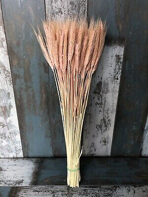 """100 Stems Dried Wheat/Rye Bunch Flowers Arranging Ready To Use Blush Pink 20"""""""