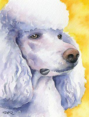 White POODLE Dog Watercolor 8 x 10 ART Print Signed by Artist DJR