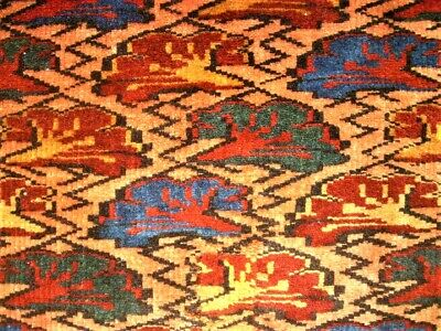 Antiker, super feiner Shirwan - antique perfect caucasian rug - Kuba