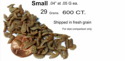 Black Soldier Fly Larvae -grain fed -indoor grown -WASHED- 750 count small (38G)