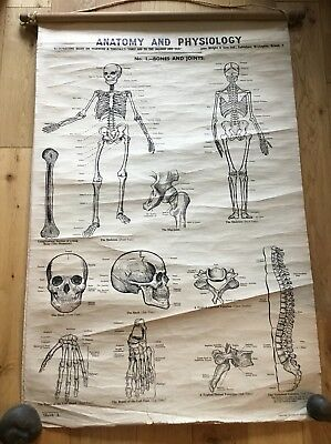 6 Warwick & Tunstalls First Aid To Injured & Sick Anatomy & Physiology Charts