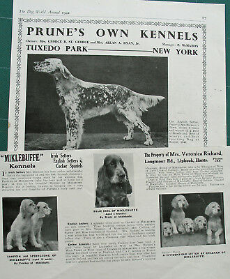 ENGLISH SETTER DOG BREED KENNEL CLIPPINGS  1930s - 1950s x 35