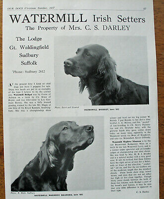 IRISH SETTER DOG BREED KENNEL CLIPPINGS 1950s - 2000s X 35