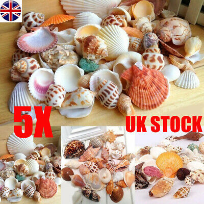 500gNatural Beach Shells Home Decor Seashells Wedding Display Craft Aquarium Sea