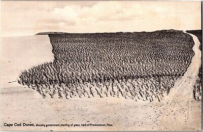 Cape Cod Dunes with Gov't Planting of Grass Provincetown MA Vintage Postcard R17