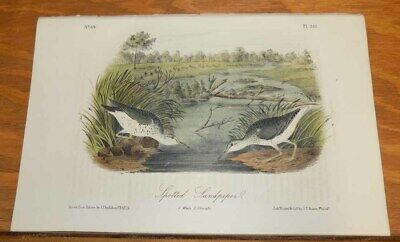 c1856 Antique COLOR Print/AUDUBON BIRDS///SPOTTED SANDPIPER