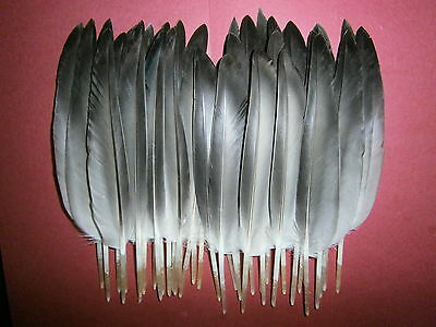 "Millinery  Floats  Fletching 40 Mallard Duck Wing Quill Feathers 7/""  20L 20R"