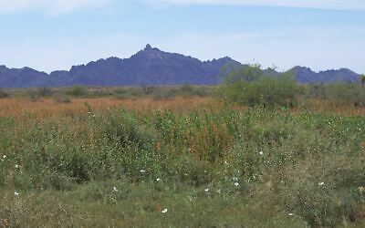 40 Acres Southern Arizona , No Reserve, Just North Of Interstate 8