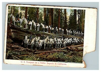 Vintage View of U.S. Troopers on a Fallen Sequoia in California Postcard A11
