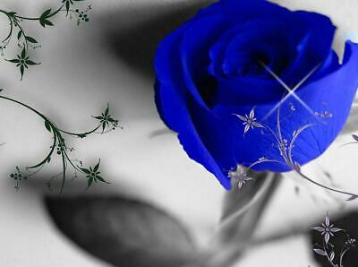 Empath Blue Rose -20 Minute Phone reading 5 free minutes (25 minutes) USA Only