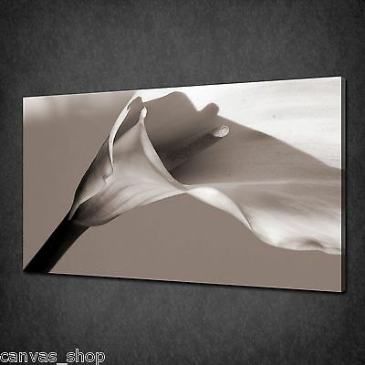 Beautiful Beige Calla Lily Flower Wall Art Canvas Print Picture Ready To Hang
