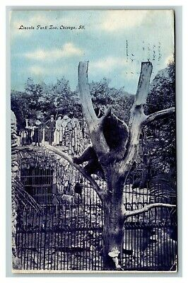 Vintage View of Lincoln Park Zoo Bear Exhibit, Chicago IL Postcard A17
