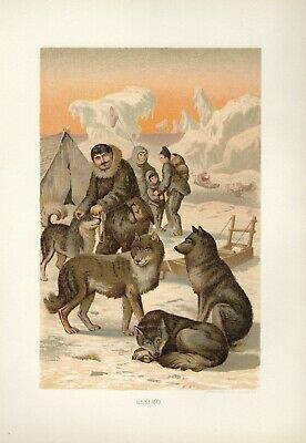 1885 Tipped-In Chromolithograph ESKIMO DOGS AND SLED VINTAGE COLOR PRINT 1885