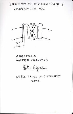 Agre Nobel Prize Original Drawing Chemistry 2003 Of Aquadorin Water Channels