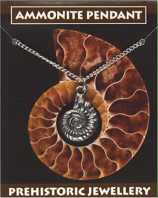 Ammonite Fossil Silver Pewter Pendant On A Chain
