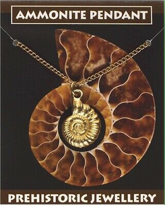 Ammonite Fossil Gold Plated Pewter Pendant On A Chain