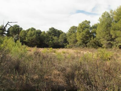 Spain land for sale