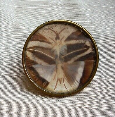 Extremely Rare 18Th Century French Feather  Butterfly Button Under Glass