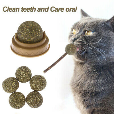 Cat Favor Natural Training Kitten Coated Mint Cat Toy Catnip Ball Pets Supply