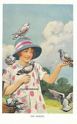 1930'S Vintage BIRD PRETTY Art Print  PIGEONS WITH YOUNG GIRL BY HARRY WOOLLEY