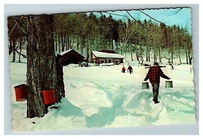 Sap Running, Manufacturing of Maple Syrup New Hampshire c1960 Postcard E9