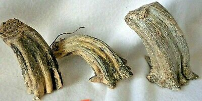 """3 X Large Chunky Dried Pumpkin Stems 4""""- 5"""" QUALITY STEMS CLEAN READY TO USE P91"""