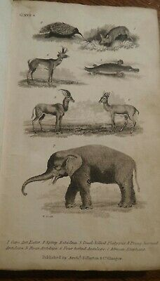 A History of The Earth & Animated Nature Goldsmith Vol l part ll Fullarton 1840