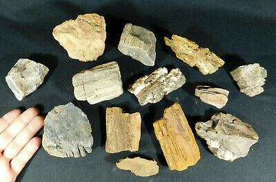 A BIG! Lot of 220 Million Year Old Petrified Wood Fossils From Utah! 2404gr e