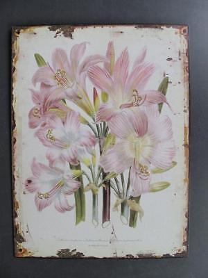 Metal Sign,Advertisement Sign Historic Lilies Blossom, Garden Wall 13x9 13/16in