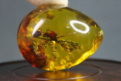 Handmade Collectable Beautiful Amber Inlay Ants & Branches Auspicious Pendant