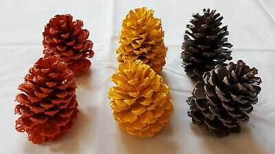 Lot of 6 Medium 3.5-4 inch Fall Color Pinecones for decoration crafts etc