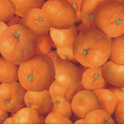 Oranges Tropical Fruit Food Kitchen Cooking Quilt Fabric FQ or Metre *New*