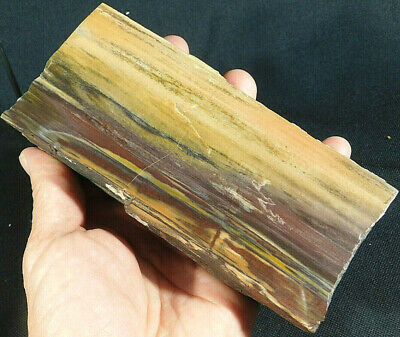 A Big! Polished 225 Million Year Old Petrified Wood Fossil From Arizona 844gr e