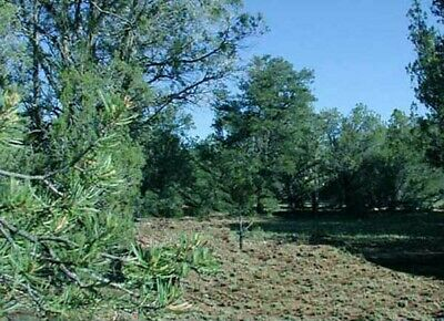 No Reserve 5 Ac Northern Arizona 6900' Elevation, Pine Trees