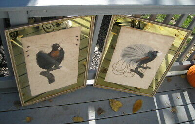 Early Large Life Size Antique Hand Colored Bird Engravings / Audubon ?