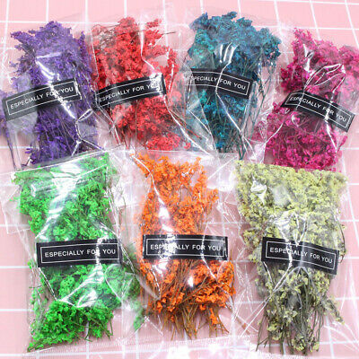 1Bag Real Pressed Dried Flowers Floral Plant Colorful Crystal Grass Babysbreath