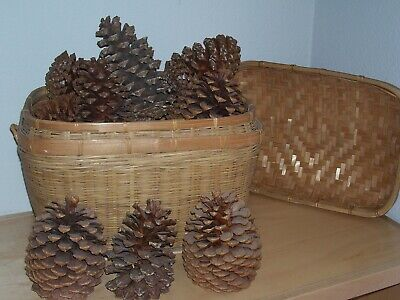 Weave Basket 14 x 10 with Lid Extra Large Pine Cones with Assorted Small Cones