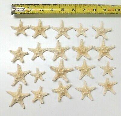 "4-5/"" White STARFISH SHELL SHELLS JEWELRY CRAFT  SEA LIFE 20pc ITEM # WSF4-20"