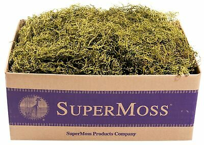 SuperMoss (27011) Spanish Moss Preserved, Basil, 3lbs Appx. 3 lb Bulk Case New