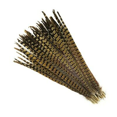 """ENGLISH RINGNECK PHEASANT Natural Feathers 14-16"""" Halloween/Hats/Costume"""