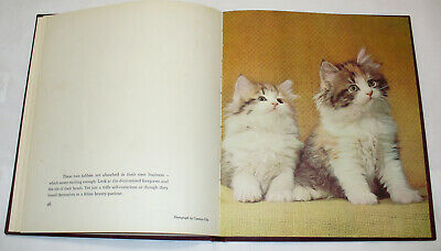 Vintage Collectible Book 1961 Kittens in Color Cat Photography Hardback Pictures