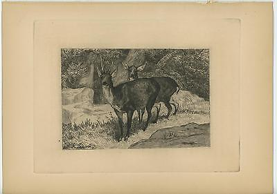 Whitetail Deer Patent Poster Art Print Antlers Sheds Taxidermy Supplies PAT359