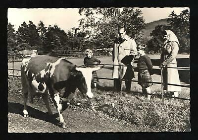 QUEEN ELIZABETH II & THE ROYAL FAMILY AT BALMORAL with COW PHOTO POSTCARD
