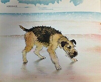AIRDALE ON THE BEACH --ADORABLE DOG VINTAGE Art Print 1950