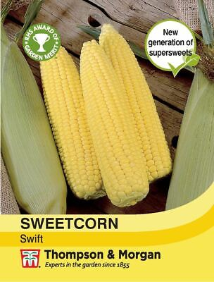 50 X Sweetcorn  Sweet Corn Seeds F1 Golden Phoenix Seeds